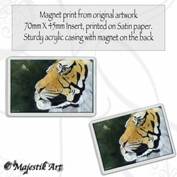 Tiger Magnet CAPTIVATE Wildlife VK
