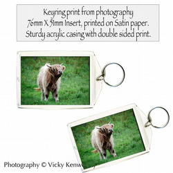 Highland Cow Keyring Photography by VK