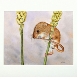 Harvest Mouse ORIGINAL Watercolour Painting, Realistic Wildlife Art, Cute Mouse