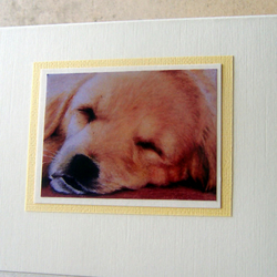 Golden Retriever Puppy Blank Greetings Card