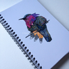 'Hummingbird' Lined Notebook