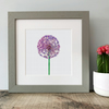 'Allium' Framed Print