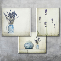 Three Shabby Chic, French Country Style Lavender Photo Prints, save 15%