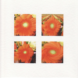 SALE - Orange Gerbera Images  -  Greetings Card or Notelet -  Photo Prints