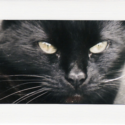 SALE - Black Cat Image 3  - Greetings Card Or Notelet  - Animal Photo Print