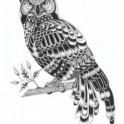 A4 print of original hand-drawn Owl