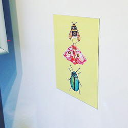 Fridge Magnet Postcard , Nature Print, Bee, Butterfly, Beetle, Art, For Her