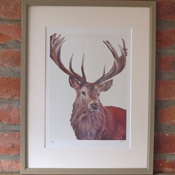 Signed Stag Print
