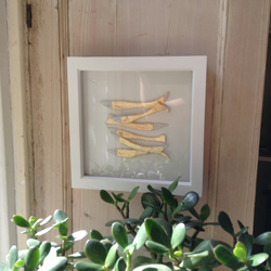 Gold fish in white box frame