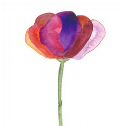 Poppy - Print of Original Watercolour Painting