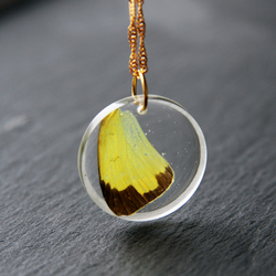 Real Dried Yellow Butterfly Wings Resin Handmade Pendant Necklace Fairy Nature