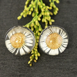 Real Dried White Daisy Pressed Flowers Minimalist Resin Daisies Studs Earrings
