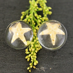Real Starfish Resin Earrings Star Fish Nautical Studs Little Mermaid Fan Gift