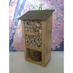 Medium Insect House