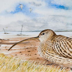 Curlew at Northey Island Causeway