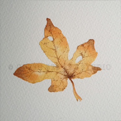 Original Watercolour - Autumn Leaves Study 3 (field maple)
