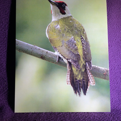 A5 Green Woodpecker Greetings Card.