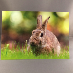Bunny greetings card.