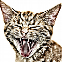 Birthday Card Yawning Cat 6inches by 6inches 15.24cm x15.24cm