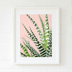 Pink succulent wall art print - Living room wall art - Fine art photography