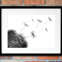 Black and white dandelion wall art print, Monochrome living room wall art