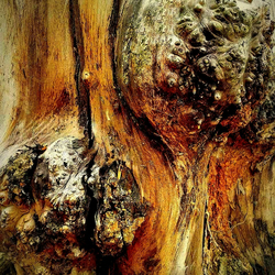 Tree Bark Abstract