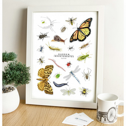 Garden Insects - British Fauna Collection