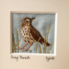 Song Thrush, hand stitched picture