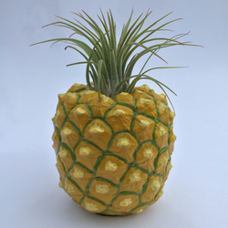 Pineapple air plant planter