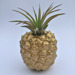 Golden pineapple planter with air plant