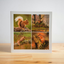 Red Squirrel Greetings Cards