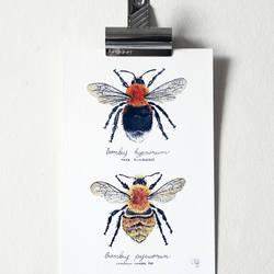 PRE-ORDER A5 'Tree Bumblebee & Common Carder Bee' giclée print