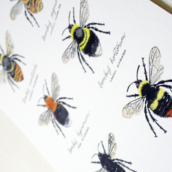 'Bumblebees' - A4 giclée print of an original watercolour illustration
