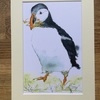 A4 or A3 mounted print of Polperro Puffin from my original watercolour