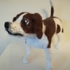 Jack Russell SOLD